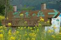 飯山市にある「菜の花の丘」