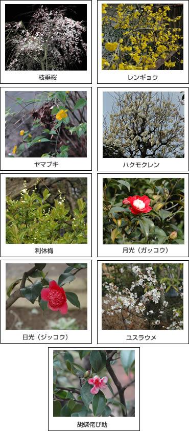 お寺に咲く花